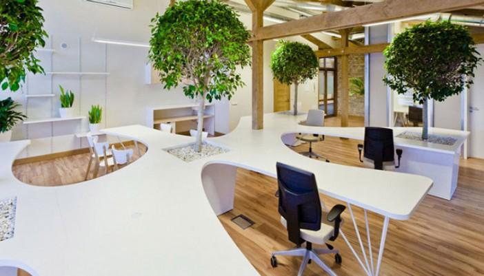 Oxigénate con más plantas en la oficina